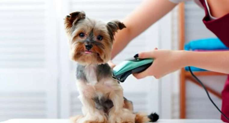 Avoid Shaving Your Dog in Summer: Here's Why